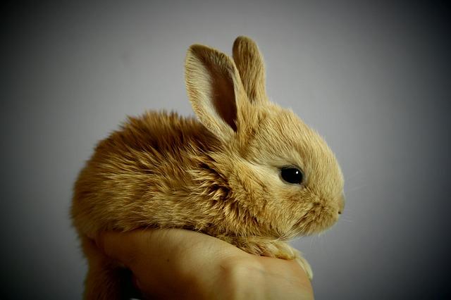 Chovejte své králíky na správném místě