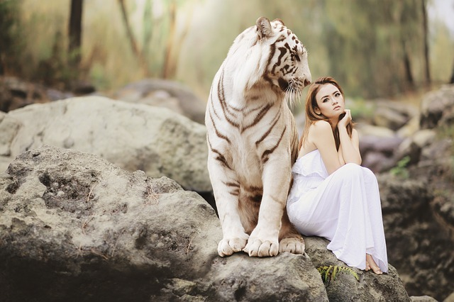 bílý bengálský tygr